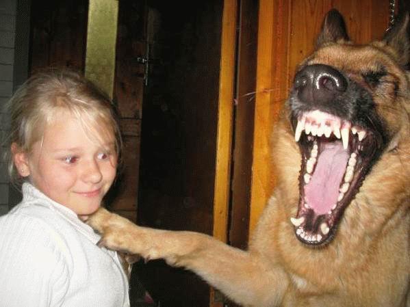 chien comique