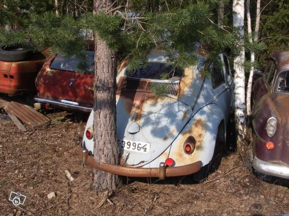 automobile arbre