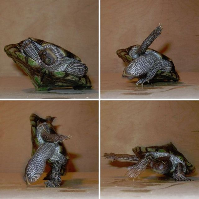 tortue-impossible
