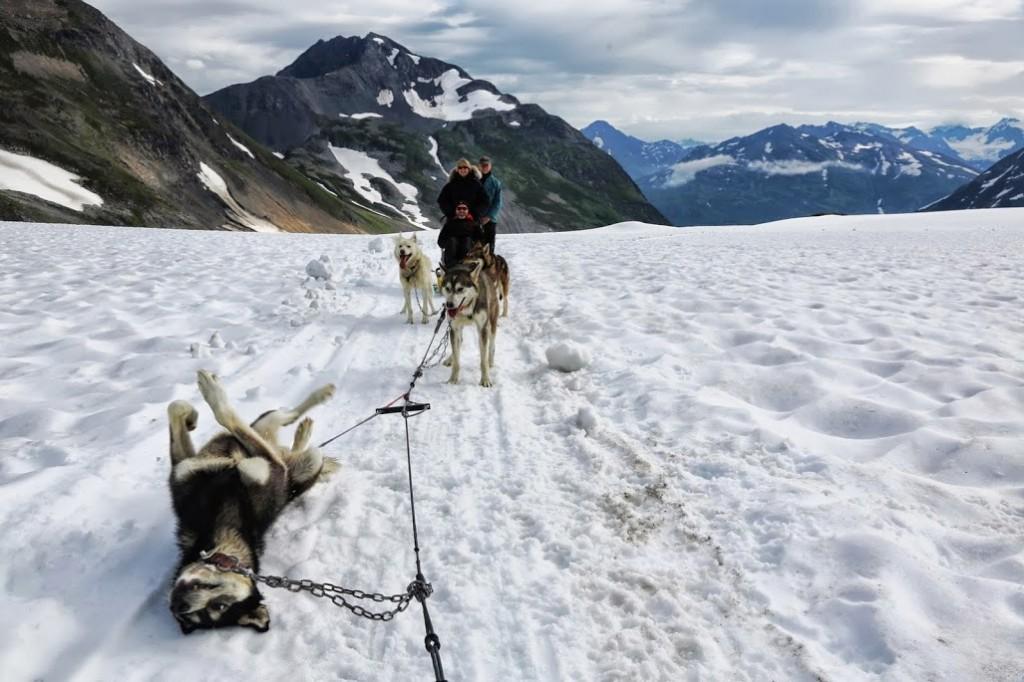 chien-alaska